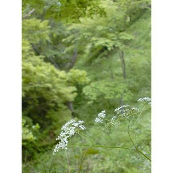 吉野山2.jpg